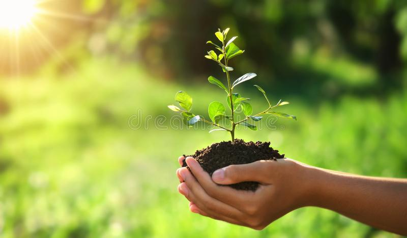 Eco earth day concept. hand holding young plant in sunshine and green nature background. Agriculture, bio, care, child, clean, conservation, development royalty free stock photography