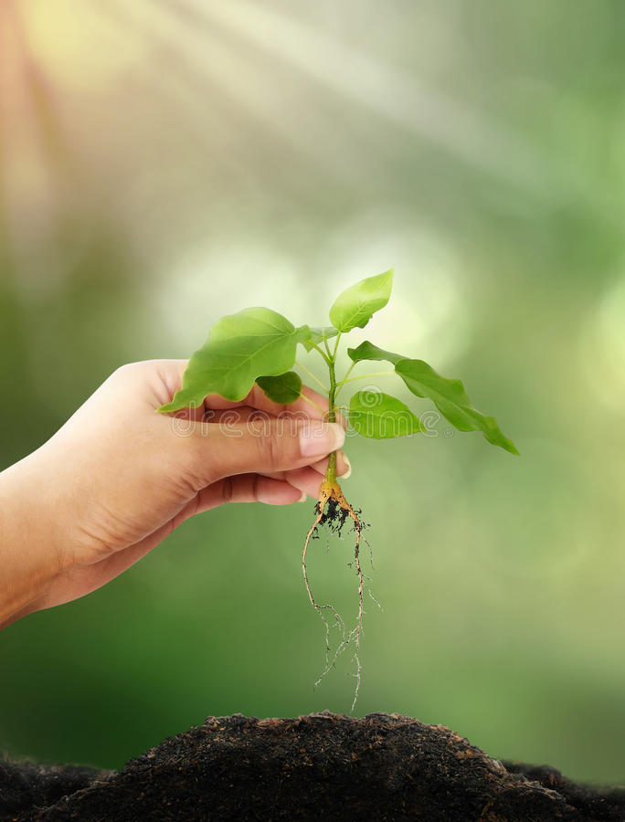 Eco and environment concept with tree planting. In blur background stock images