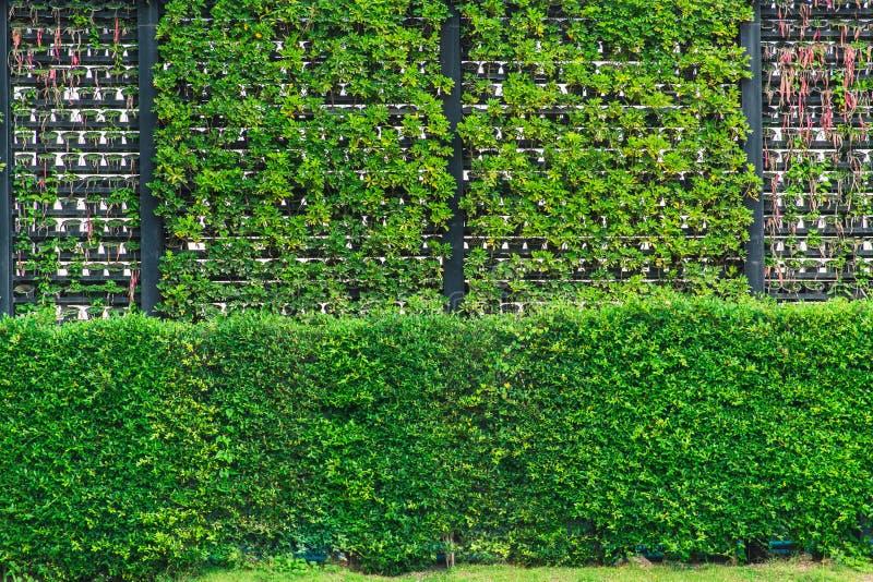 Eco et mur frais de nature verticale moderne de jardin image stock