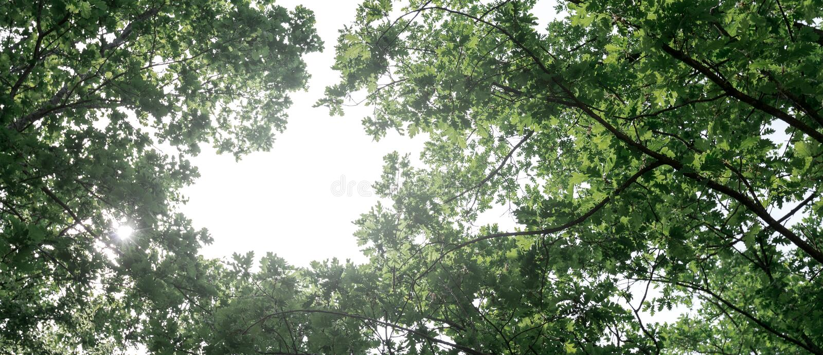 Eco-friendly air transport concept. The plane flies in the sky against the background of green trees. Environmental pollution. Harmful emissions royalty free stock images