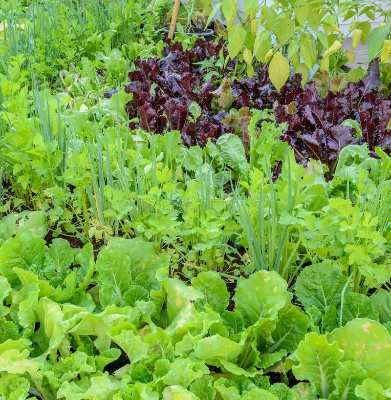 Eco-friendly backyard vegetable garden royalty free stock image