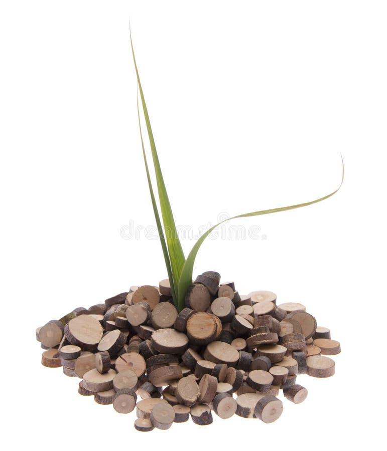 Eco Friendly Growth