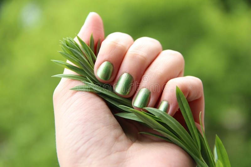 Eco friendly nail polish: mint coloured manicure. A female hand with spring green (mint coloured) nail polish on holding a twig against a green background royalty free stock photo