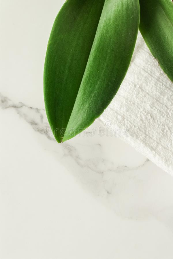 Eco-friendly way of life. Green leaf on marble, flatlay - luxury design background, sustainable products and environmental concept. Eco-friendly way of life stock photo
