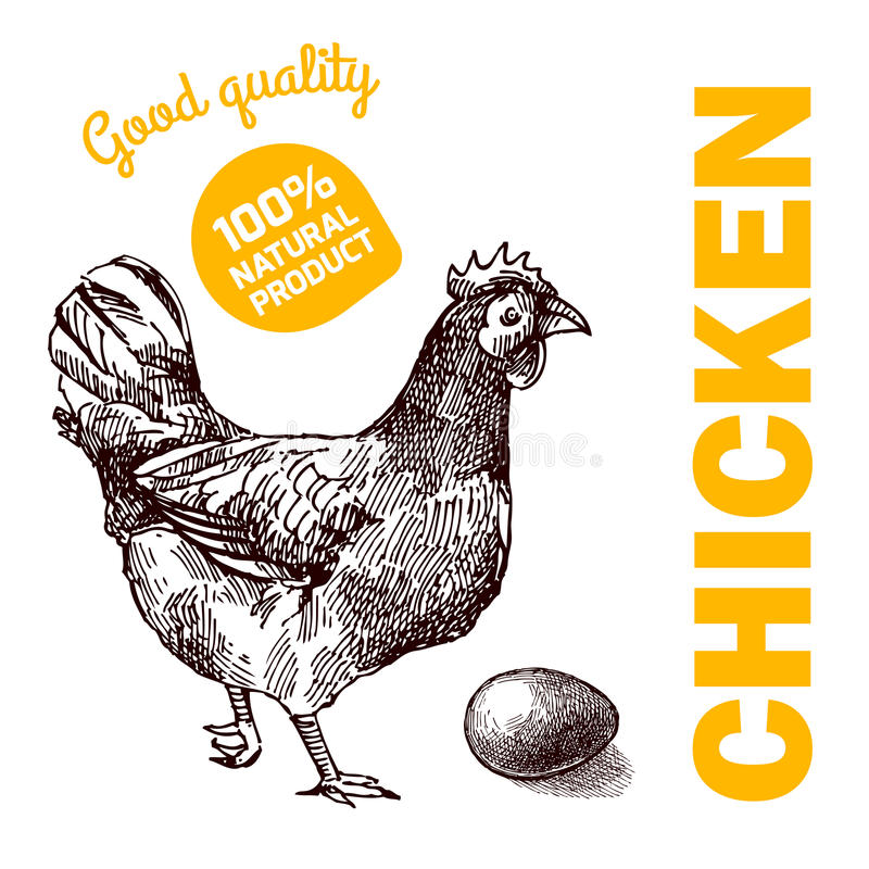 Eco gospodarstwa rolnego kurczak royalty ilustracja