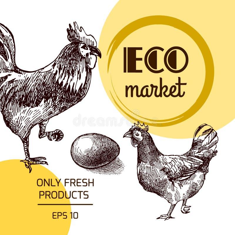 Eco gospodarstwa rolnego kurczak ilustracji