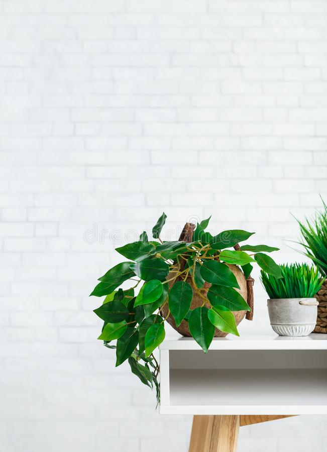 Eco green decor concept. Indoor green plants in pots on table at white brick wall background. Eco green decor concept royalty free stock images