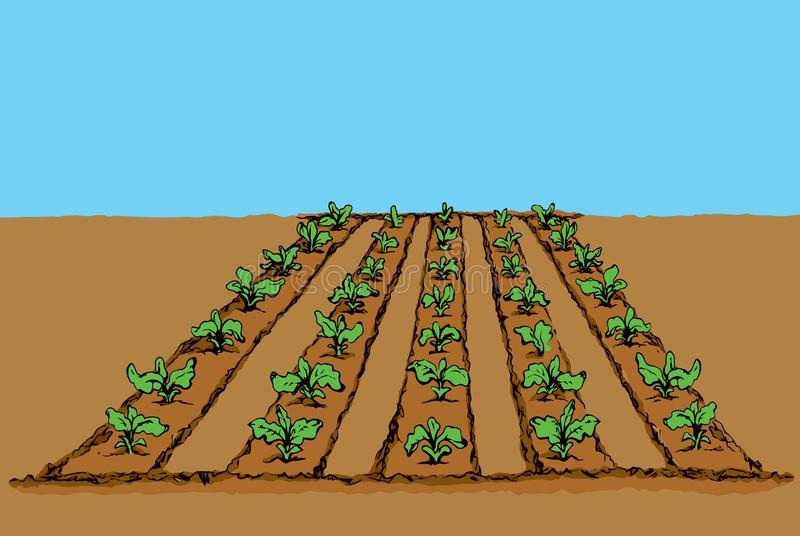 Garden beds. Vector drawing. Eco green early lush raw soy bush flora culture sow on tillage furrow mulch patch on blue sky background. Bright color hand drawn stock illustration