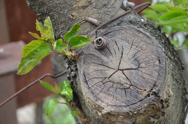 Eco het groeien tak stock afbeelding