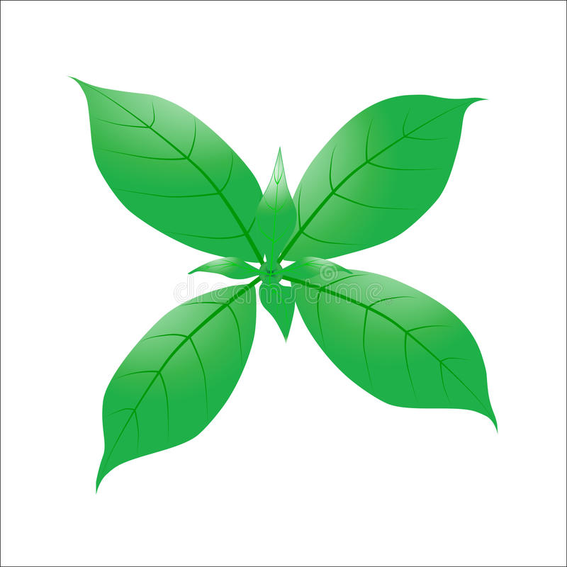 Eco icon with Green leaf with water drop. royalty free illustration