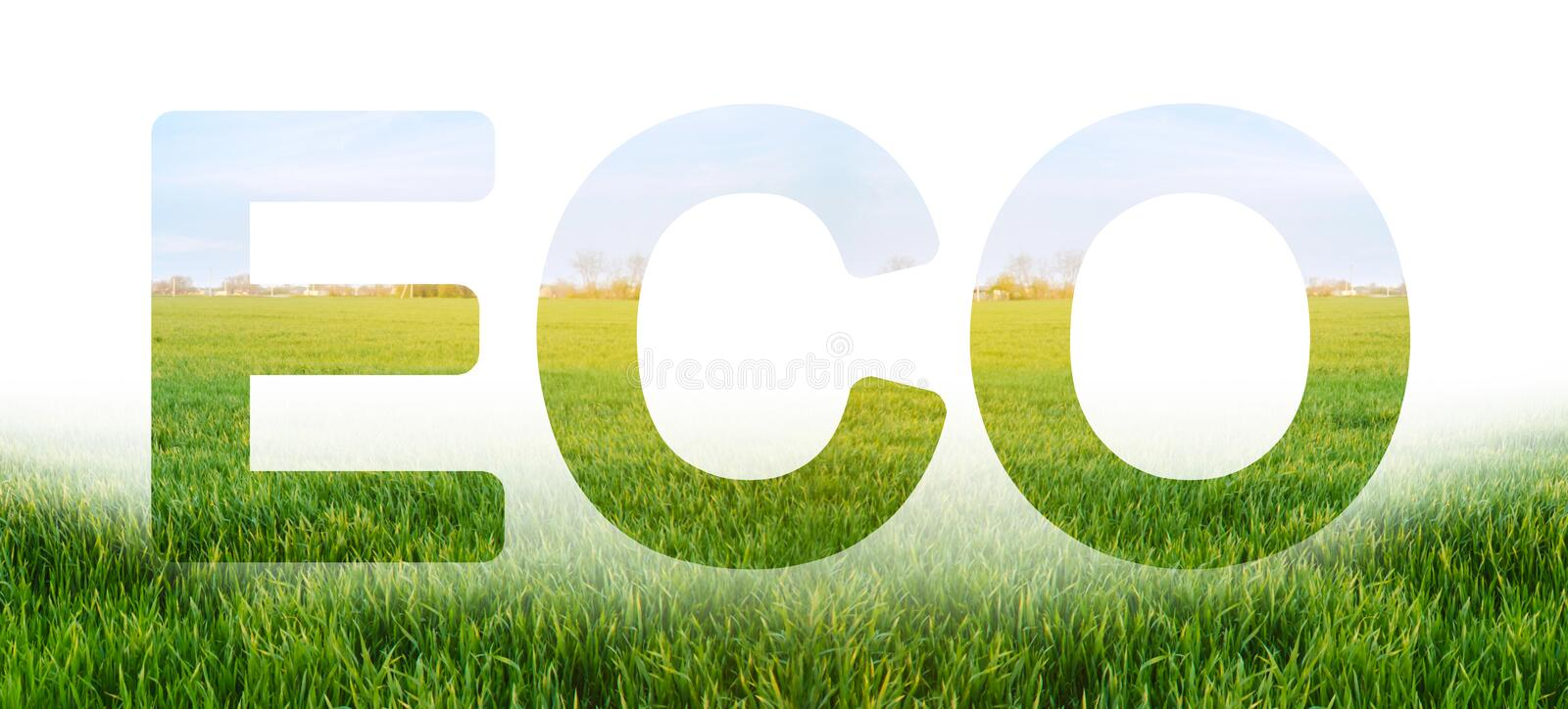 Eco inscription on the background of young green wheat plantation field. Environmentally friendly harvest, quality control stock photography