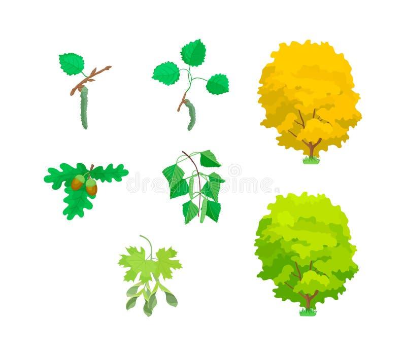 Eco lämnar av träd: ek lönn, asp, björk, buskar stock illustrationer