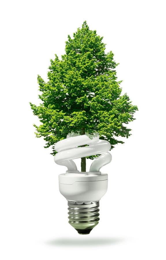 Eco Lampe Und Baum Stockfotografie