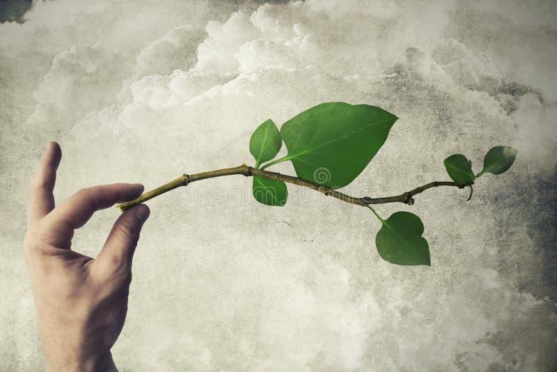 Eco-Leben lizenzfreie stockfotos