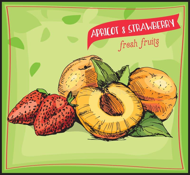Eco-Lebensmittelkennzeichnung Hand gezeichnete Skizzenaprikose und -erdbeere stock abbildung