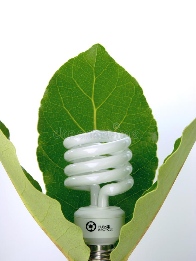 Eco Light Bulb. A compact fluorescent lamp presented as a flower surrounded with leaves stock photos