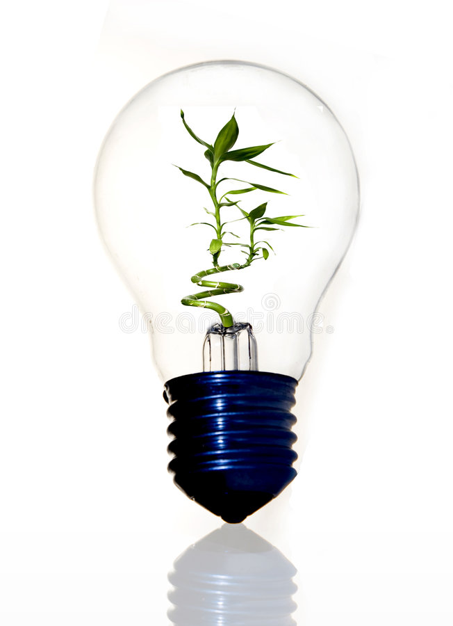 Download Eco Light Bulb With Bamboo Stock Image - Image: 7858441