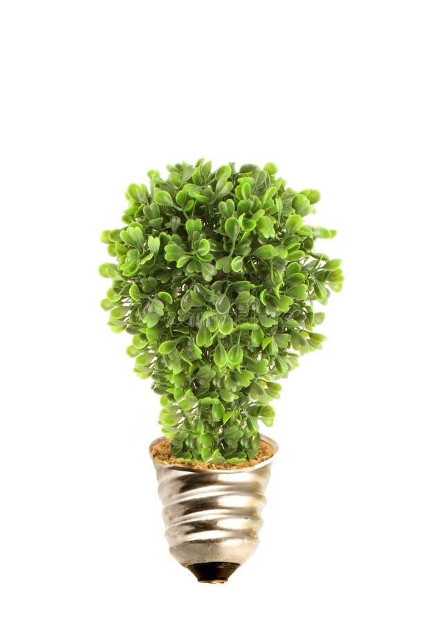 eco lightbulb tree στοκ φωτογραφίες