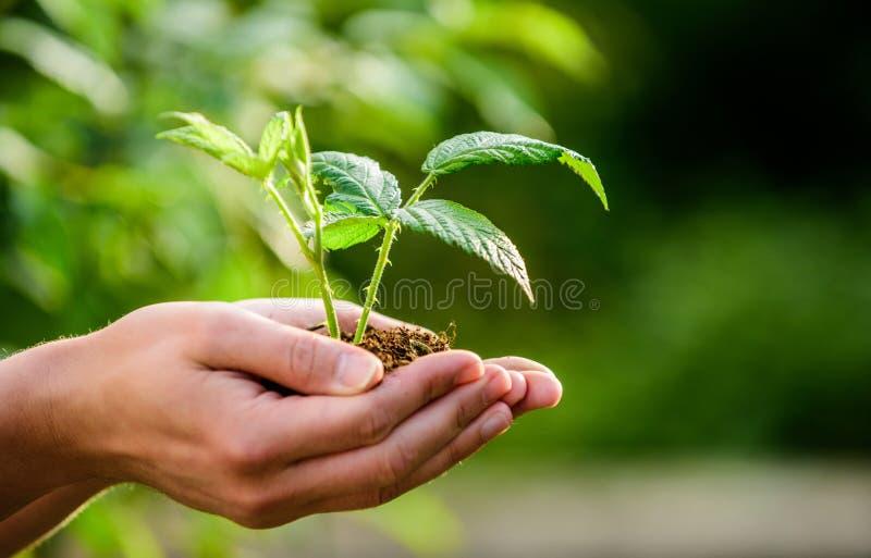 Eco living bruka och åkerbruk odling Arbeta i tr?dg?rden Ny livf?delse växt i jordning i händer omsorgväxter eco arkivfoton