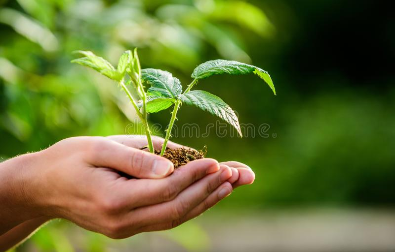Eco living. farming and agriculture cultivation. Gardening. new life birth. plant in ground in hands. care plants. Eco. Farm. Earth day. ecology environment stock photos