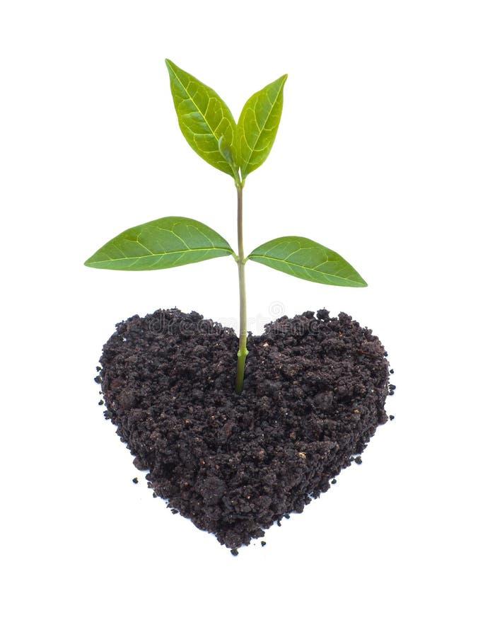 Free Eco Love Royalty Free Stock Photography - 14146277