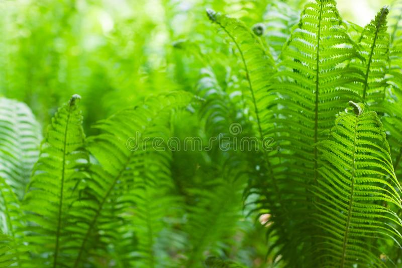 Eco nature / green abstract background defocused.Spring summer stock photo
