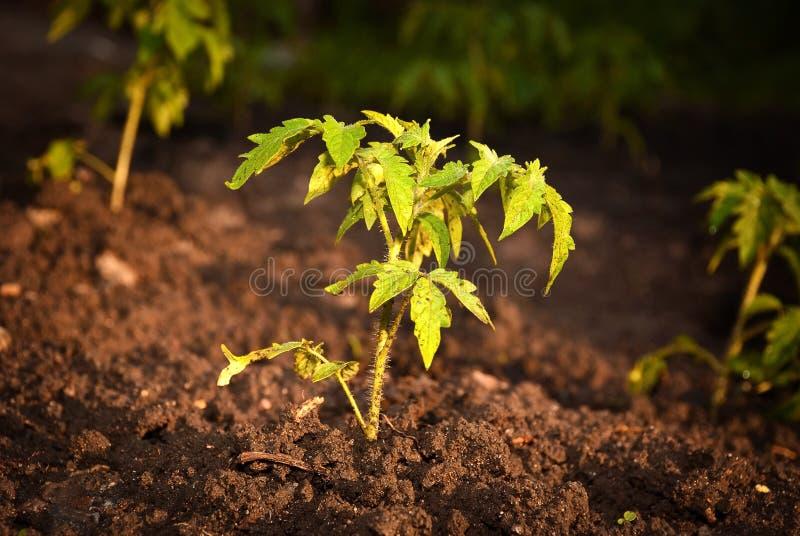 Eco plant royalty free stock photo