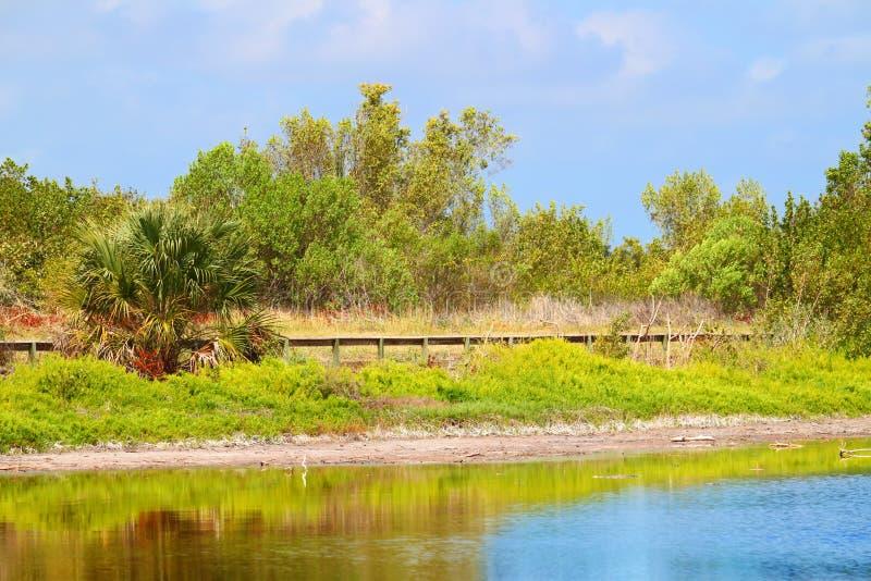 Download Eco Pond Everglades National Park Stock Image - Image: 28631039
