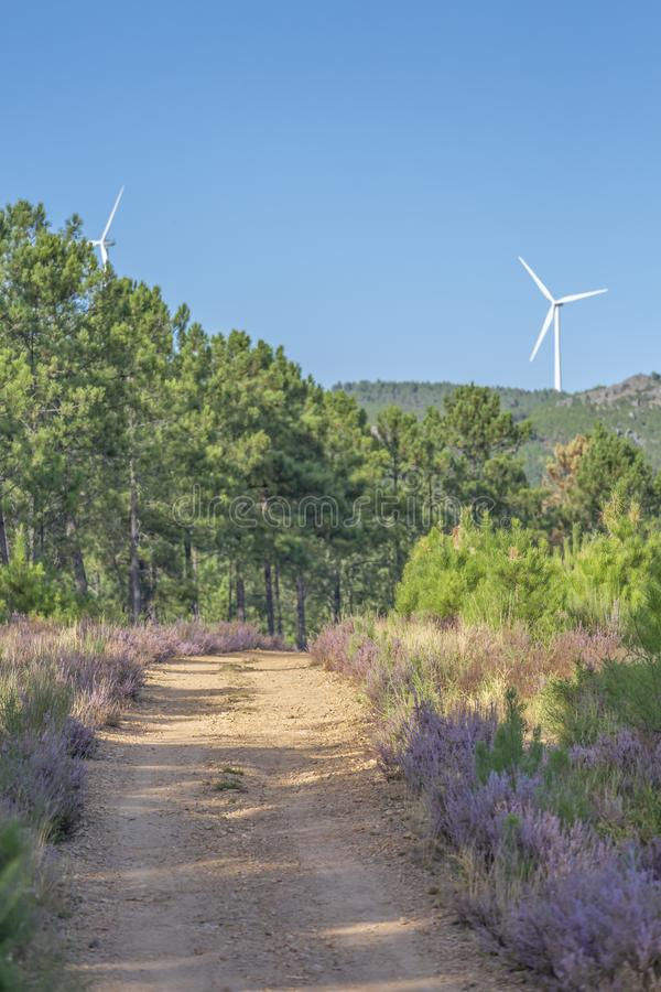 Eco temat, krajobraz, silnika wiatrowego horyzont obrazy royalty free