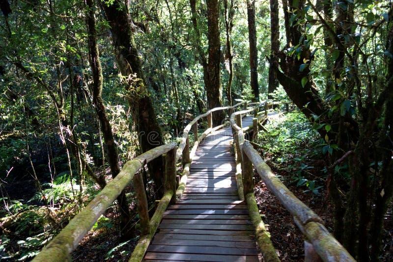 Eco-Tourismus-Promenade des tropischen Gebirgswaldes lizenzfreie stockbilder