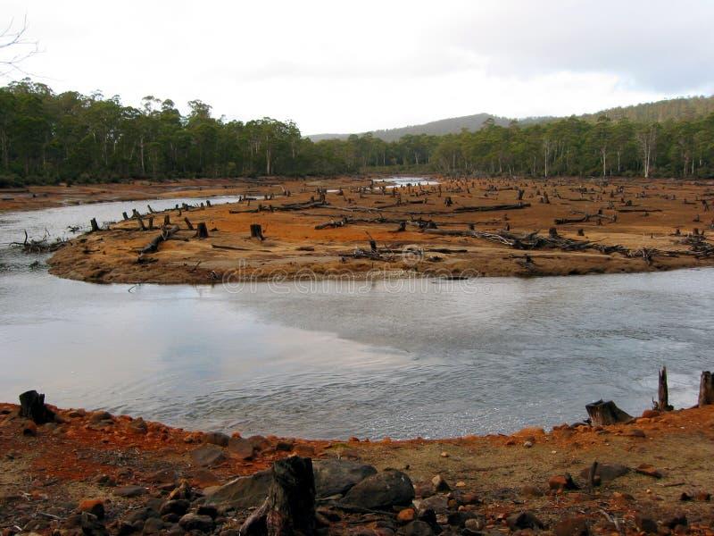 Eco-vandalisme dans les forêts tasmaniennes 3 photographie stock libre de droits