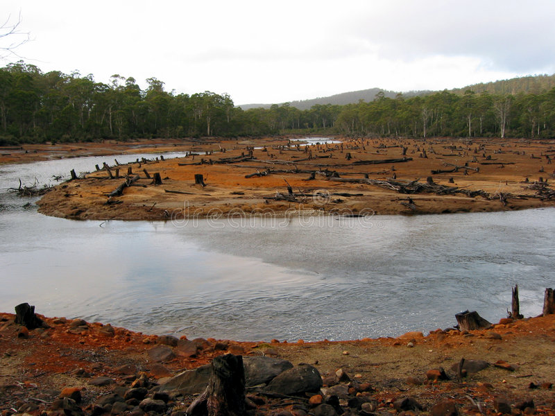 Eco-vandalismo nas florestas tasmanianas 3 fotografia de stock royalty free