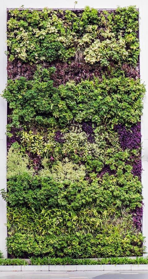 Eco vriendschappelijke groene muur stock afbeeldingen