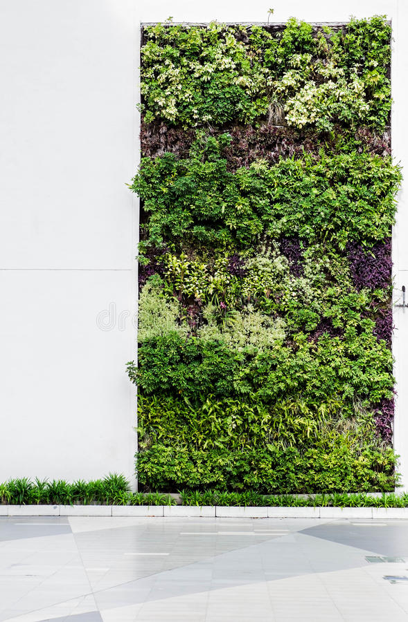 Eco vriendschappelijke groene muur royalty-vrije stock afbeeldingen