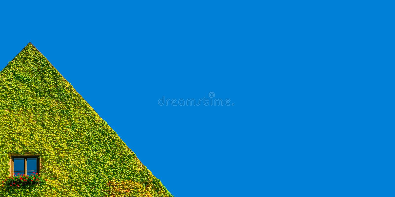 Ecofriendly house with lonely window in green ivy plants at sunny day and blue sky. Ecofriendly house with lonely window in green ivy plants at sunny day stock photos