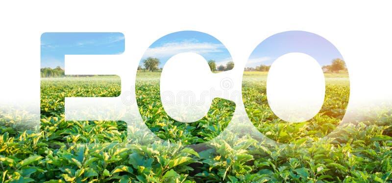 Ecoinschrijving op de achtergrond van het gebied van de aubergineaanplanting Milieuvriendelijk oogst, kwaliteitscontrole en gebru royalty-vrije stock afbeeldingen