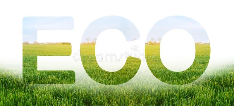 Ecoinschrijving op de achtergrond van het jonge groene gebied van de tarweaanplanting Milieuvriendelijke oogst, kwaliteitscontrol stock fotografie