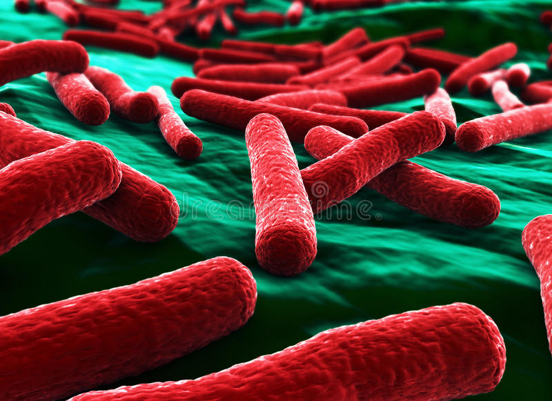 Ecoli Bacteria Close up Red stock illustration
