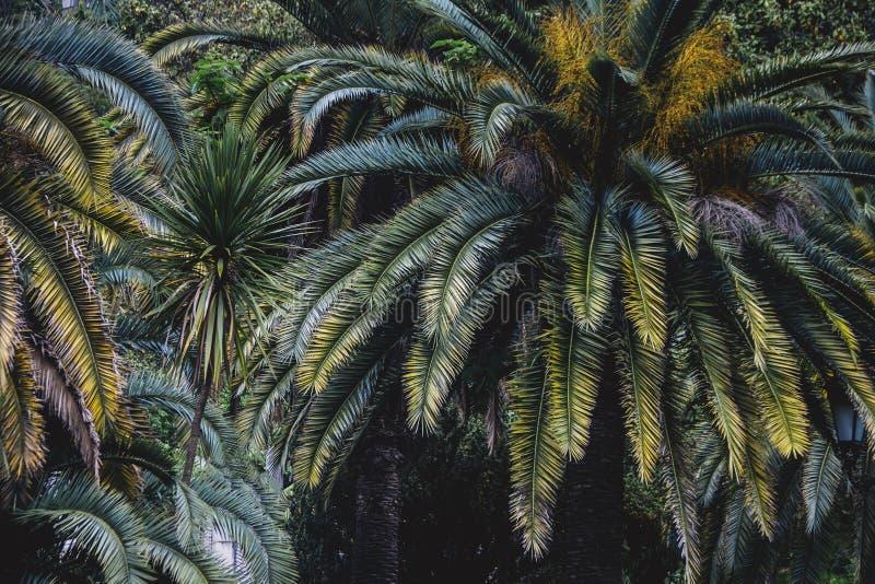 Ecología de la hoja de la planta de la palma imagen de archivo libre de regalías