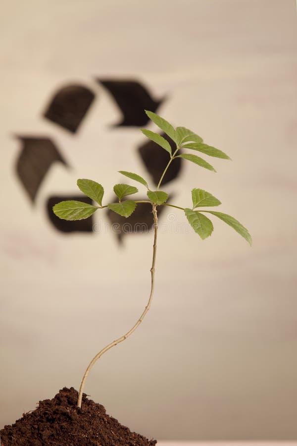 ecologic laboratorium royaltyfri bild