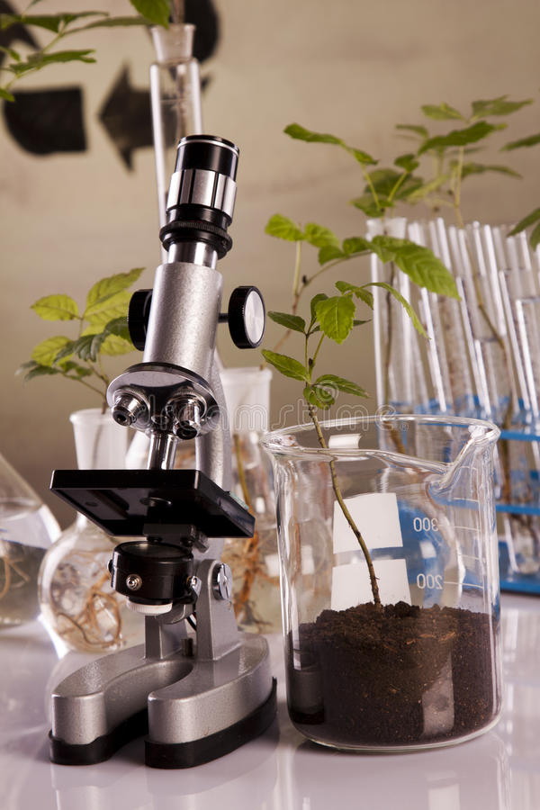 Ecologic laboratory. Looking for new eco friendly source of energy royalty free stock photography