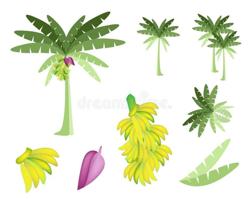 Set of Banana Tree with Bananas and Blossom vector illustration
