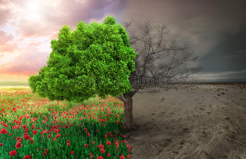 Ecological concept with tree and climate changing landscape.  stock photos