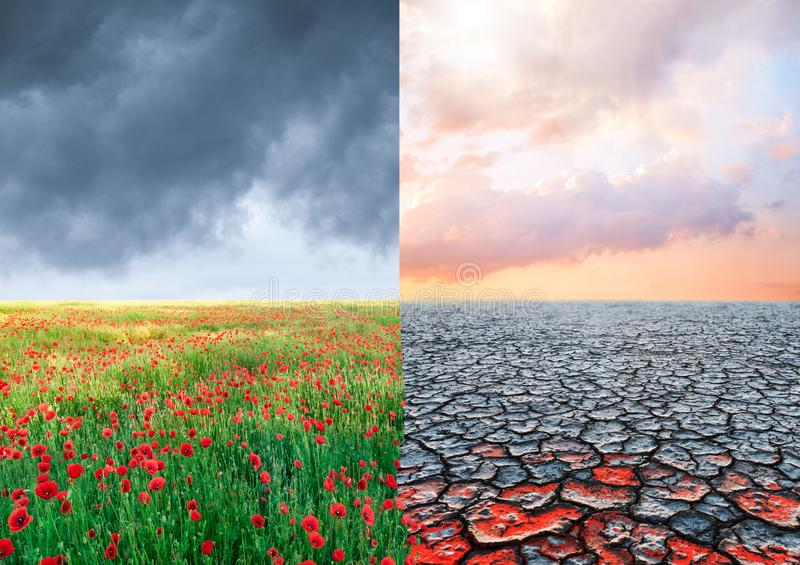 Ecological concept with tree and climate changing landscape stock image