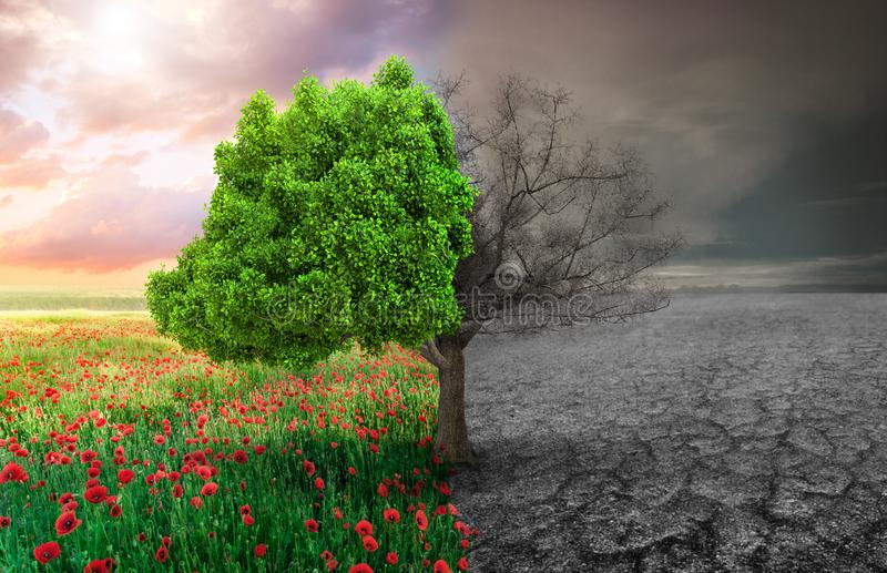 Ecological concept with tree and climate vector illustration
