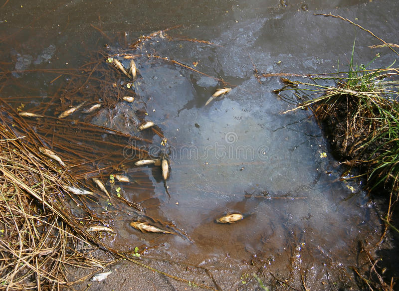 Download Ecological disaster stock image. Image of ecological - 26715251