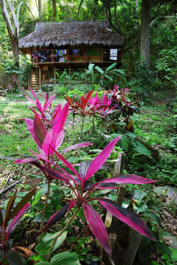 Ecological forest cottage in Minca, Sierra Nevada de Santa Marta Mountain. Minca is a charming village in the Sierra Nevada de Santa Marta, famous for its stock images