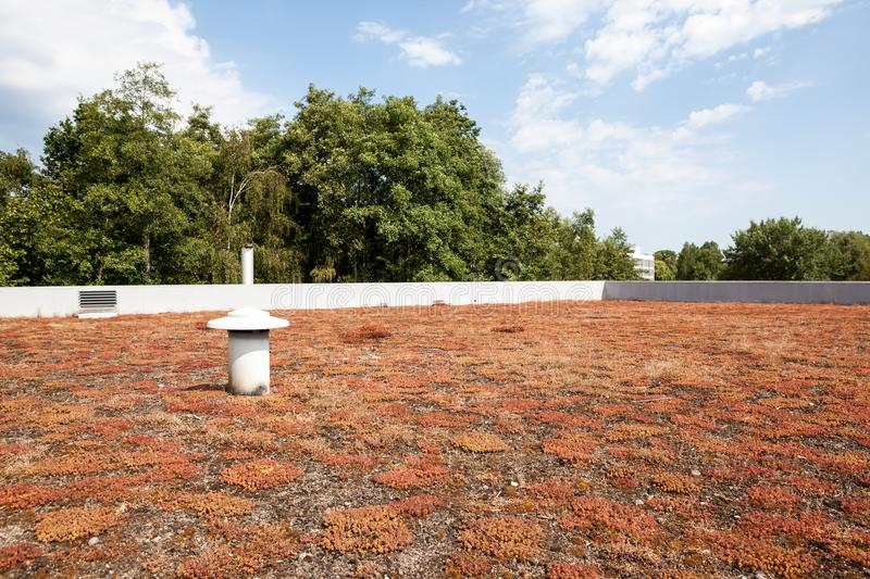 Ecological green flat roof. On a large building there is an ecological green flat roof with plants as protection stock image