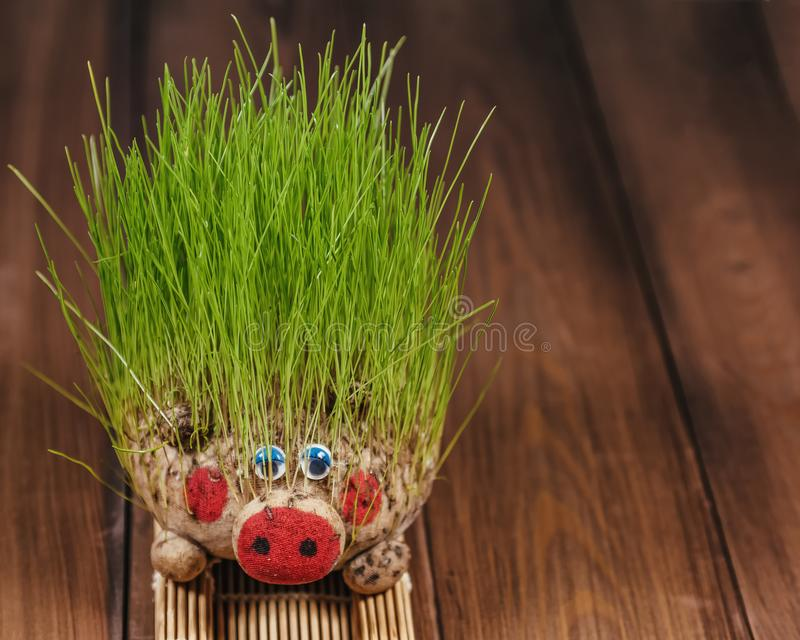 Ecological toy in the form of a pig with sprouted grass stock photography