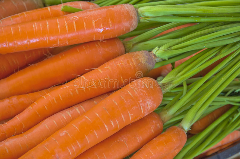 Ecologically Clean Carrots royalty free stock images